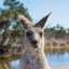 Clearies of Australia